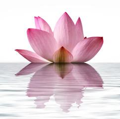 Fototapeta Do Spa Floating Lotus