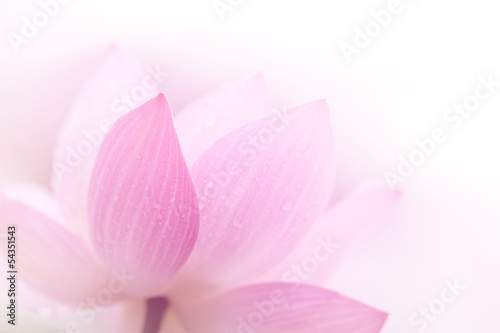 Photo  Closeup on lotus petal