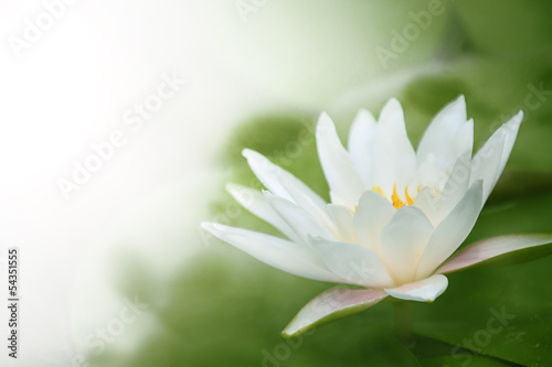Foto op Aluminium Lotusbloem closeup on water lily