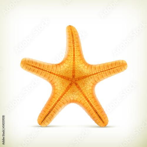Fotografie, Obraz  Starfish, realistic vector icons