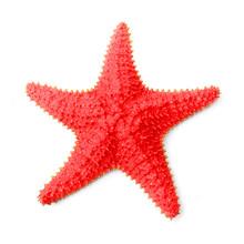 The Common Caribbean Starfish ...