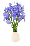 iris flowers in vase
