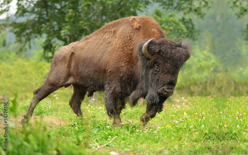 Recess Fitting Bison Bison