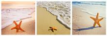 Starfish Collage