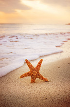 Starfish On The Beach
