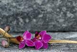 Fototapeta Orchid - Orchideenblüte in einer Palmblattschale