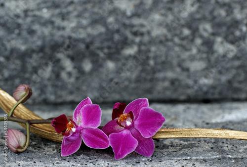 Foto auf AluDibond Orchideen Orchideenblüte in einer Palmblattschale