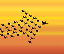 Leadership Synergy Concept  Swan Flying - Evening Sky - Arrow