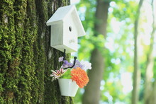Bird House & Flowers On Tree