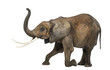 Side view of an African elephant, kneeling, performing, isolated