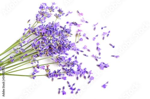 Poster Lavande Fresh lavender