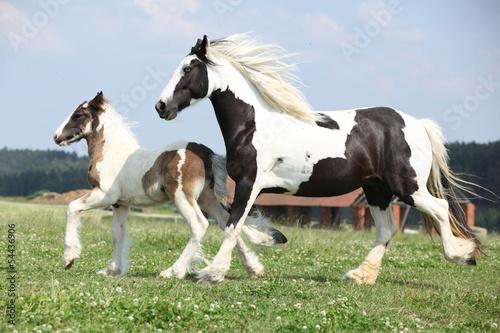 Portrait of nice arabian horse Fototapete