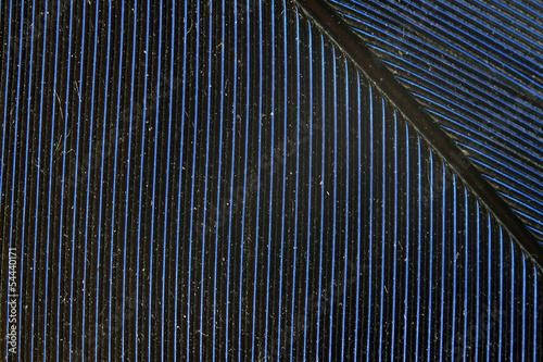 Valokuva  détail graphique d'une plume bleue