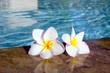 flower on swimming pool