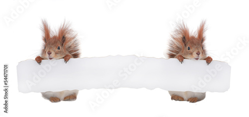 Foto op Canvas Eekhoorn two squirrel