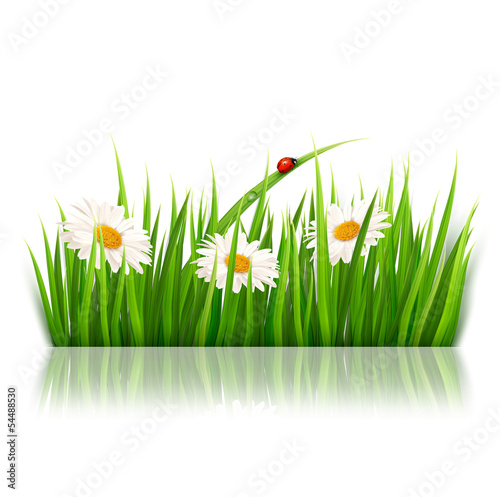 Fotografia Nature background with green grass and flowers Vector.