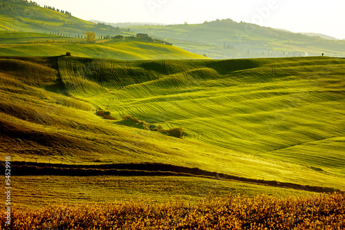 Tuinposter Wijngaard Countryside, San Quirico´Orcia , Tuscany, Italy