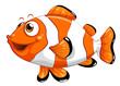 A nemo fish