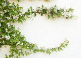 Natural frame of jasmine flowers on white wall