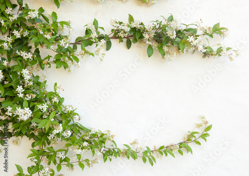 Photo Natural frame of jasmine flowers on white wall