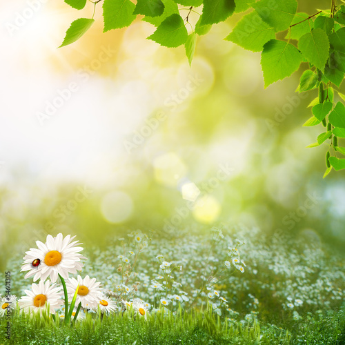 Staande foto Lente Beauty summer day on the meadow, abstract natural landscape