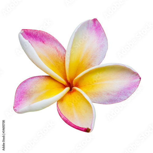 Foto op Canvas Frangipani Flower of temple