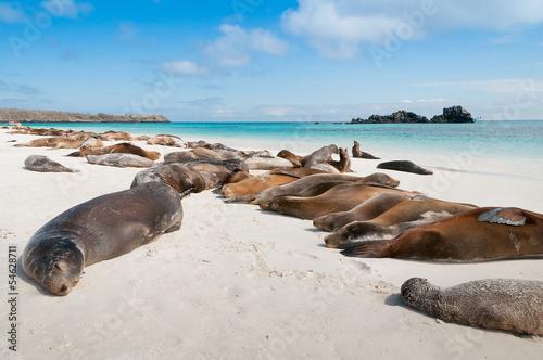 Fotobehang Leeuw Sleeping sea lions Galapagos