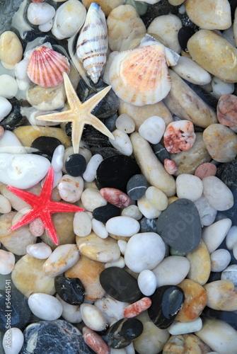 muszla-rozgwiazda-i-kolorowe-kamienie-zwirowe