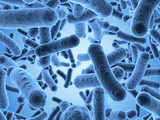 Bacteria seen under a  scanning microscope - 54649932