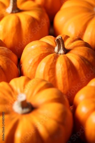 Closeup of  many small pumpkins.
