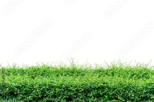 Fotografija Bushes fence