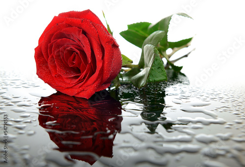 Obraz w ramie Red rose on glass with water droplets