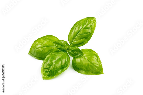 Fotografía  basil isolated on white background