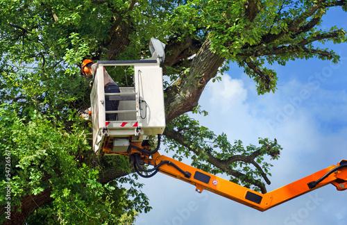Arbeiter bei Baumrückschnitt mit Hubsteiger Canvas Print