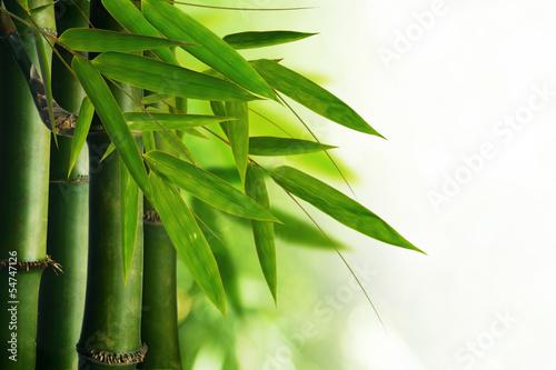 bamboo tree #54747126