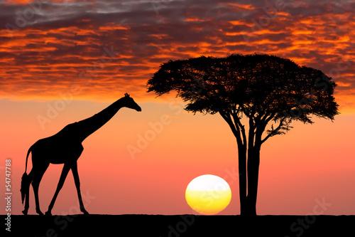 Staande foto Afrika African sunset