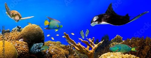 Staande foto Koraalriffen Underwater tropical reef panorama