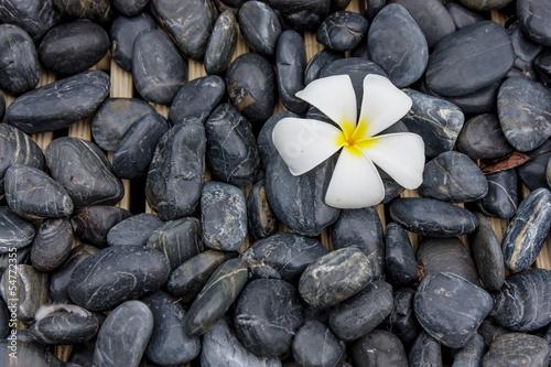 storczyk-na-kamieniach-spa