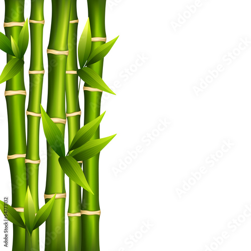 bambus-na-bialym-tle