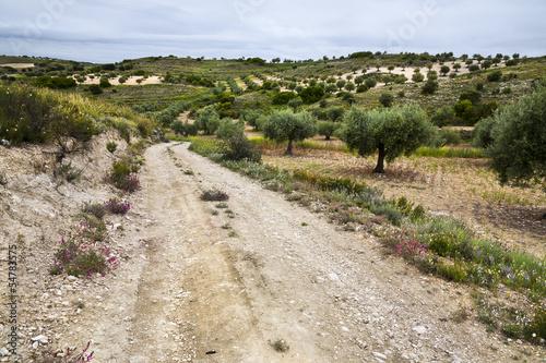 Camino de la Cañada de Morata Canvas Print