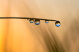 world reflection in dew drops