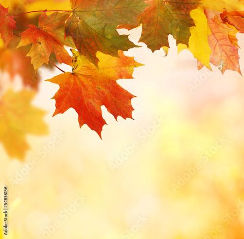 Fototapeta na wymiar autumn background