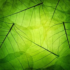 Obraz na Szkle Green leaves vintage background