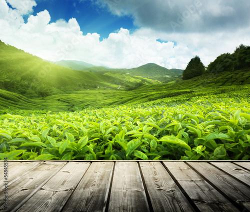Valokuva wood floor on tea plantation Cameron highlands, Malaysia