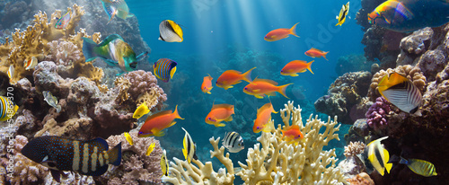 Coral and fish - 54869370