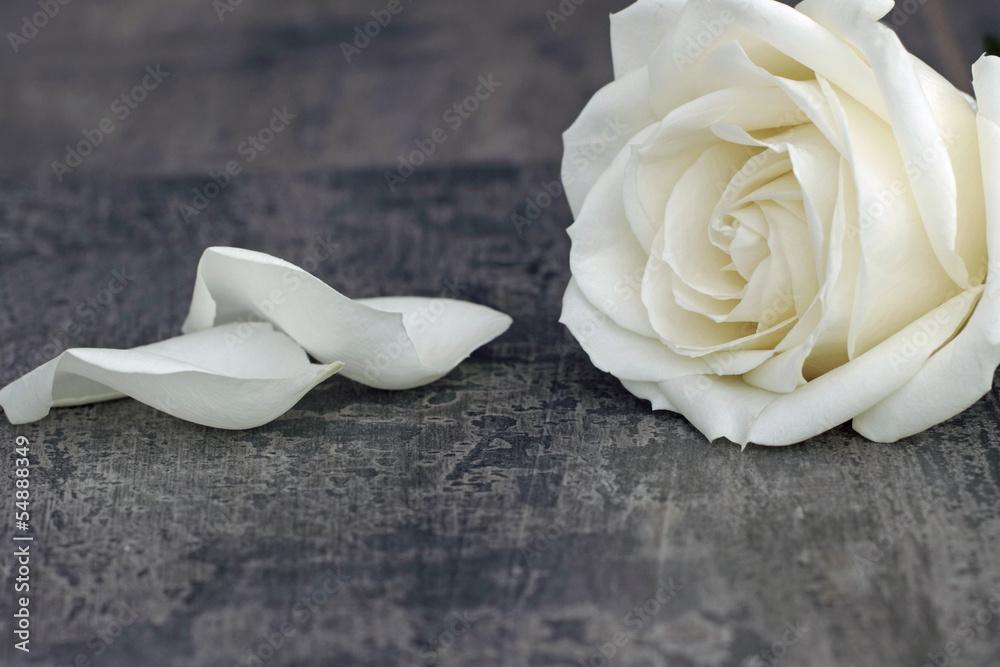 Weisse Rose Plakat