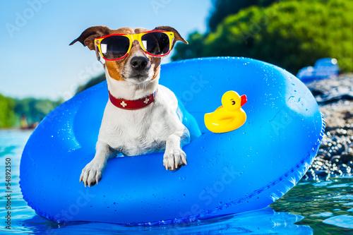 Obraz na plátně beach dog
