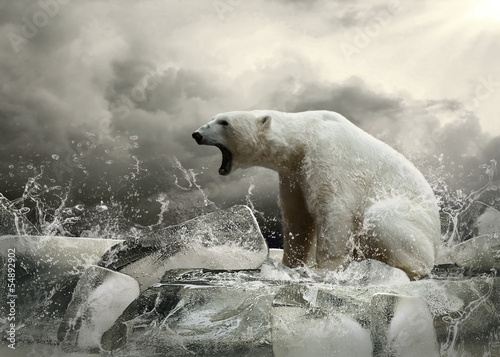 Photo Stands Polar bear White Polar Bear Hunter on the Ice in water drops.