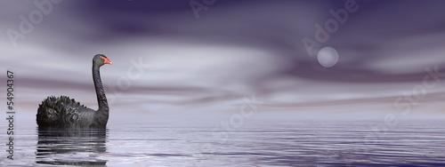 Fotografie, Obraz Black swan peace - 3D render