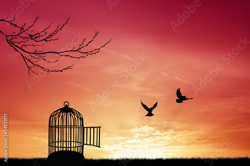 Fotografie, Obraz  Bird cage silhouette